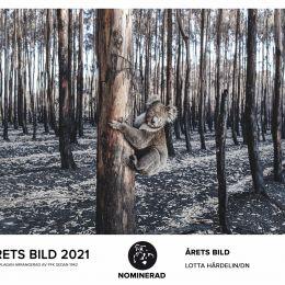 ÅRETS BILD 2021