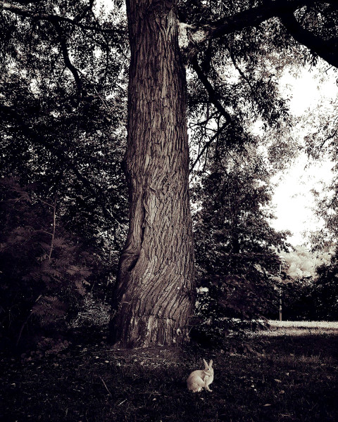 © Lena Katarina Johansson Titel: Utan titel.  Plats/Datum: Stockholm, 2019.  Bildmått: 32×40 cm. Teknik: Arkivbeständig pigmentbläckutskrift.  Montering: Svart träram med passepartout 50x60 cm. Upplaga: 20 + 1 AP. Signerad: Ja.  Pris: 4 500 SEK.