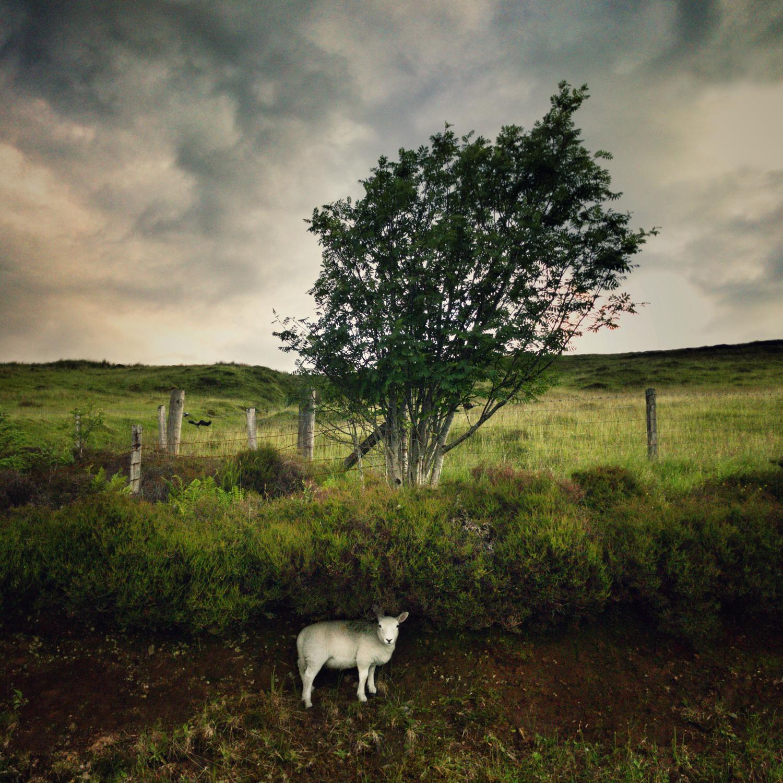 © Malin Gezelius  Titel: Isle of Skye Plats/Datum: Skottland, 2017 Bildmått: 30x30 cm Teknik: Arkivbeständig pigmentbläckutskrift Montering: Metallam med passepartout 40x40 cm Upplaga 20   Signerad: Ja  Pris SEK 3500
