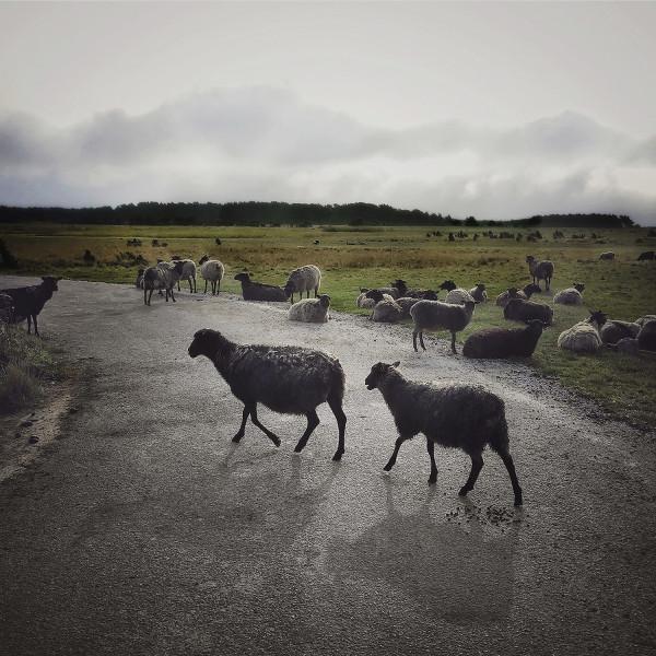 © Pernille Tofte   Titel: Foggy morning   Plats: Gotland, 2019 Bildmått: 25x25 cm Teknik: Arkivbeständig pigmentbläckutskrift Montering: Svart träram med passepartout 40x40 cm Upplaga: 15. Signerad: ja Pris: SEK 3 900 kr