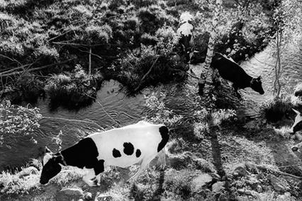 © Nina Korhonen Titel: Kor i kö Plats/Datum: Finland 1990 Mått: 30,5x46 cm Teknik: Silvergelatin print. Montering: Träram med glas, 52x62 cm Upplaga: 30 Signerad: ja Pris: 8000 SEK