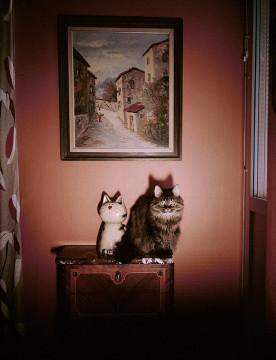 © Julia Lindemalm Titel: Katt People #13 Plats/Datum: Malmö 2016    Bildmått: 27×33 cm    Teknik: Arkivbeständig pigmentbläckutskrift Montering: Säljs oinramad Upplaga: 20 Signerad: Ja  Pris: 3 500 SEK