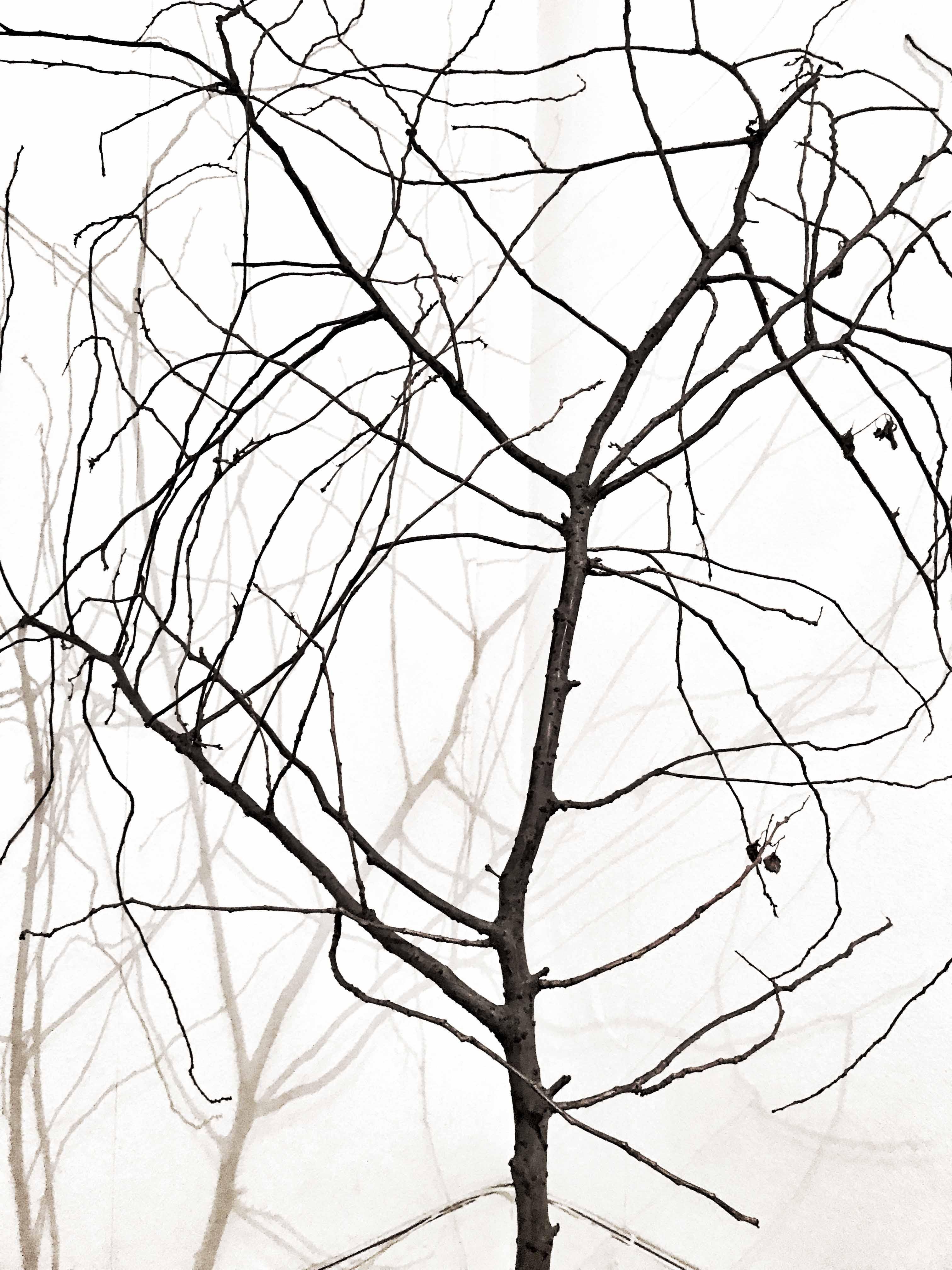 © Mia Galde Titel: Nudum Ligno  Plats/Datum: Zürich 2017 Bildmått: 18x24  cm Teknik: Arkivbeständig pigmentbläckutskrift  Montering: Träram med passepartout   Upplaga: 10  Signerad: Ja   Pris: SEK 5 000.