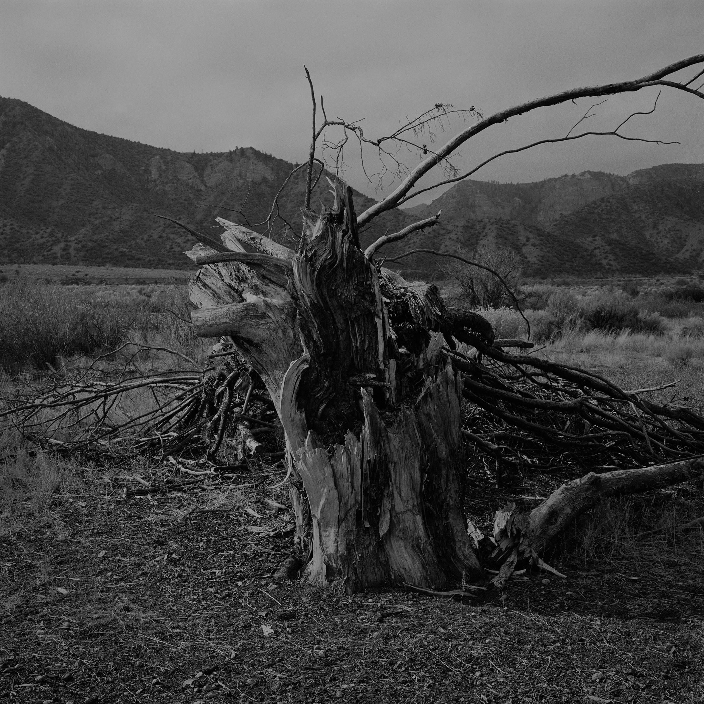 © Stefan Bladh Plats/datum:  Californien 2014 #2 Bildmått: 30x30 cm Teknik: Arkivbeständig pigmentutskrift  Montering: Träram med passepartout 50x50 cm. Upplaga: 5 + 1 AP  Signerad: Ja  Pris: SEK 4 500 (oinramad bild SEK 3 900)