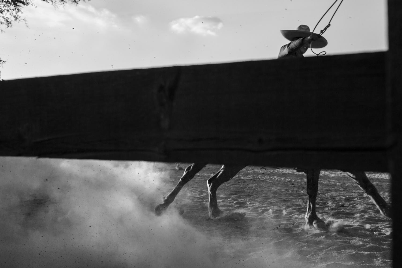 © Lisen Stibeck  Titel: Rodeo  Plats/Datum: Oaxaca/Mexico 2015 Bildmått: 25x38 cm  Teknik: Arkivbeständig pigmentbläckutskrift Upplaga: 10 + 2 AP  Signerad: Ja  Pris: SEK 16 000