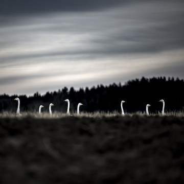© Eva Wistemar