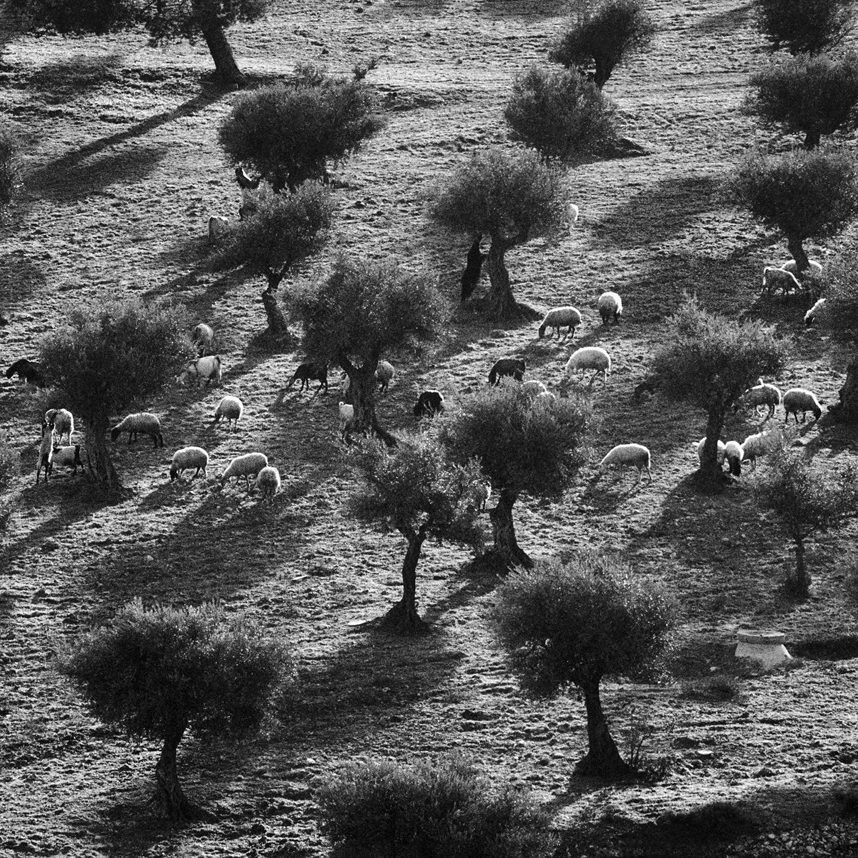 © Donald Boström. Herdarnas äng, Betlehem 2005. Bildmått: 40×40 cm / Inramad 50×50 cm.Arkivbeständig pigmentbläckutskrift. Edition 1/10. Signerad.  Utropspris: 5 000:-