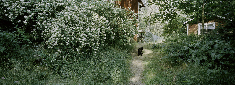 © Julia Lindemalm Titel: Katt People #14 Plats/Datum: Rödeby 2015    Bildmått: 30×83 cm    Teknik: Arkivbeständig pigmentbläckutskrift Montering: Säljs oinramad.Upplaga: 20 Signerad: Ja  Pris: SEK 4 500