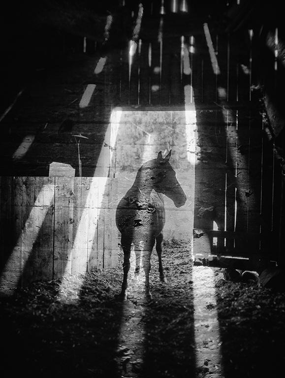 © Markus Jenemark  Titel: Råckekärr Plats/Datum: Hjo 2015 Bildmått: 34x26 cm Teknik: Arkivbeständig pigmentbläckutskrift Montering: Träram med passepartout 40x50 cm  Upplaga: 12 + 2 AP  Signerad: Ja Pris: SEK 3900