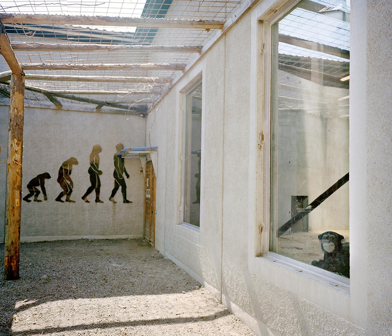 © Julia Lindemalm Titel: Schimpans , ur serien Zoo World Plats/Datum: Färjestaden 2012    Bildmått: 43×50 cm    Teknik: Digital c-print Montering: Säljs oinramad Upplaga: 20 Signerad: Ja  Pris: SEK 5 500