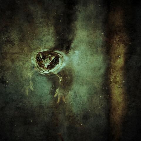 © Malin Gezelius  Titel: The Frog, Stockholm 2015. Bildmått: 40x40 cm Teknik: Arkivbeständig pigmentutskrift Montering: säljs oinramad Upplaga: 20  Signerad: Ja Pris: SEK 3 000