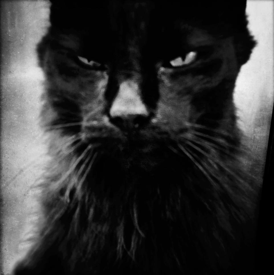 © Malin Gezelius  Titel: The black cat Plats/Datum: Stockholm 2013 Bildmått: 30x30 cm Teknik:  Arkivbeständig pigmentbläckutskrift Montering: Träram med passepartout 40x50 cm Upplaga: 20 Signerad: Ja Pris: SEK 3500