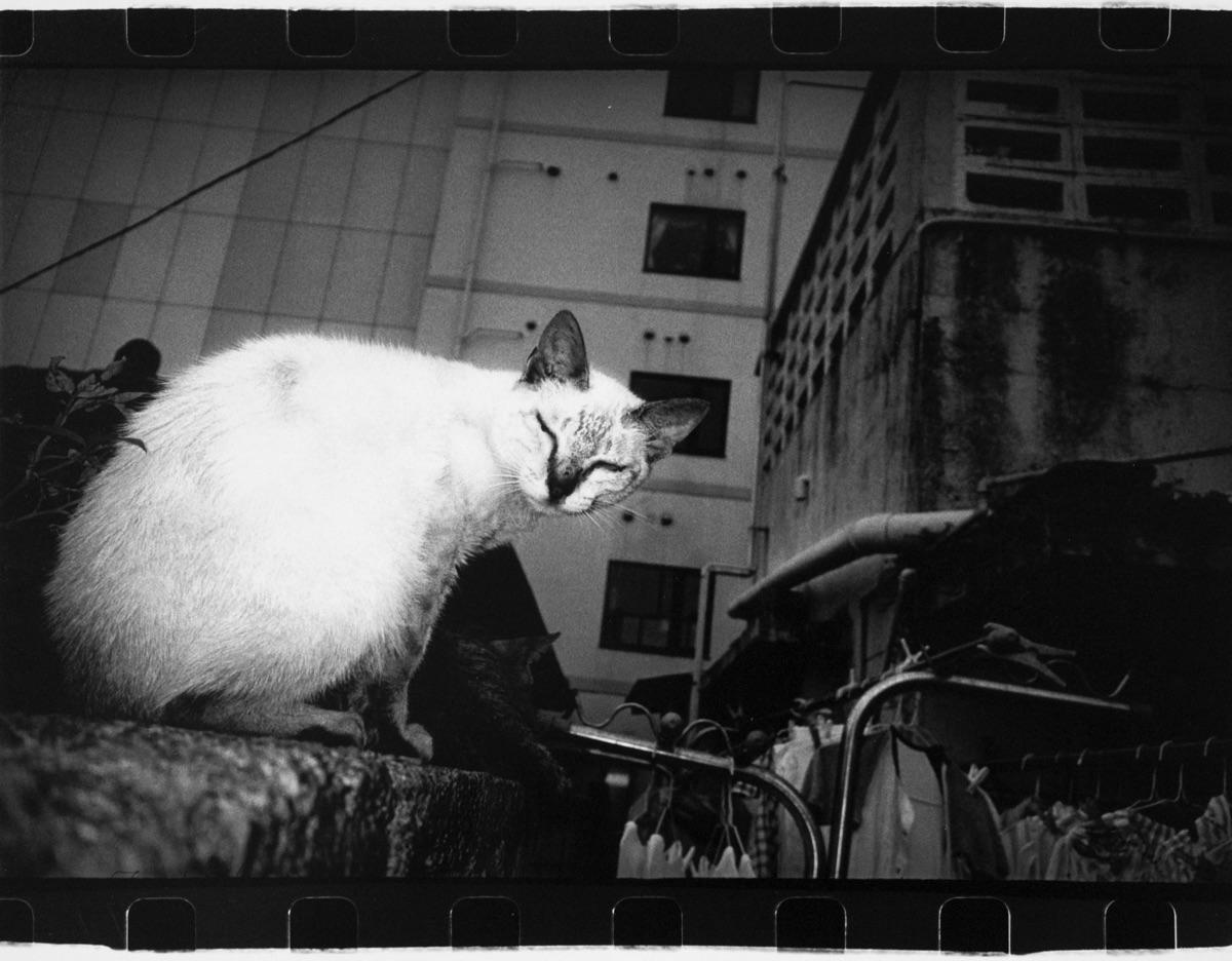 © Anders Petersen Titel: Cat Plats/Datum: Okinawa 2000 Teknik: Silver gelatin print Signerad: Ja Pris: SEK 30 000 (avser oinramad bild)