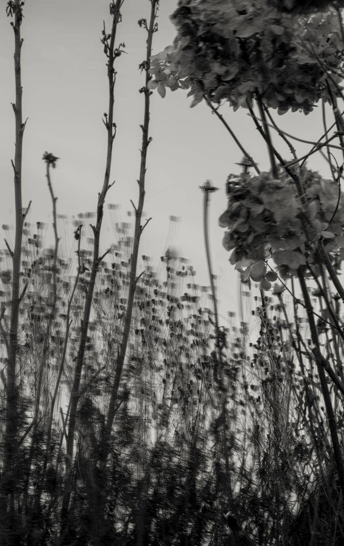 17.1. Anna Lu Lundholm. Bloss #1. (Säljs tillsammans med Bloss #3.) Utropspris: 6 000:- Bildmått: 17×27 cm / Inramade 30×42 cm. Arkivbeständig pigmentbläckutskrift. Edition 1/10. Signerade.