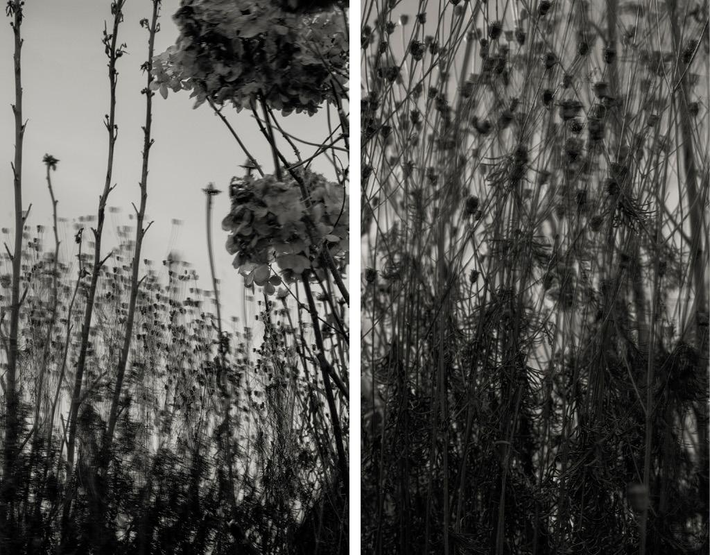 © Anna Lu Lundholm. Bloss #1. ochBloss #3. (säljs tillsammans) Bildmått: 2 x 17×27 cm / Inramade 30×42 cm.  Arkivbeständiga pigmentbläckutskrifter Upplaga: 1/10. Signerade.  Pris:  SEK 6 000